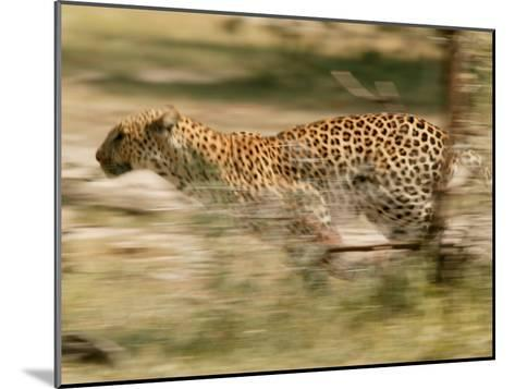 Leopard, Panthera Pardus, Running Through the Woods-Beverly Joubert-Mounted Photographic Print