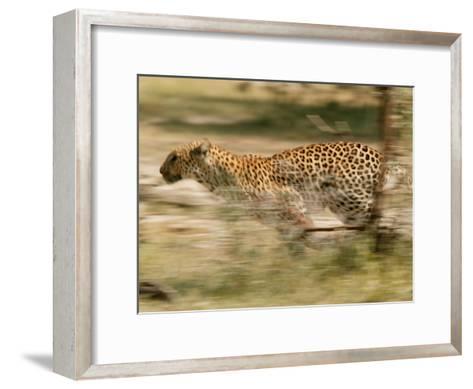 Leopard, Panthera Pardus, Running Through the Woods-Beverly Joubert-Framed Art Print
