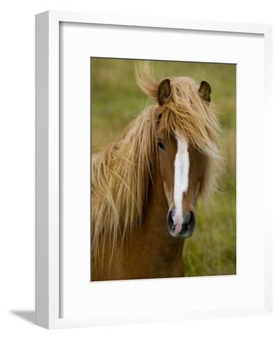 Portrait of an Icelandic Horse with it's Mane Blowing in the Wind-Mattias Klum-Framed Art Print