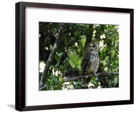 Barred Owl Sitting on a Tree Branch-Raul Touzon-Framed Art Print