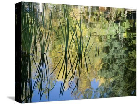 Trees and Grasses Reflected in a Pond in Grand Teton National Park-National Geographic Photographer-Stretched Canvas Print