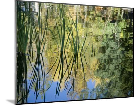 Trees and Grasses Reflected in a Pond in Grand Teton National Park-National Geographic Photographer-Mounted Photographic Print