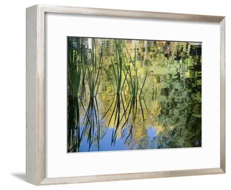 Trees and Grasses Reflected in a Pond in Grand Teton National Park-National Geographic Photographer-Framed Art Print