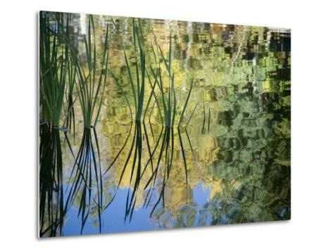 Trees and Grasses Reflected in a Pond in Grand Teton National Park-National Geographic Photographer-Metal Print