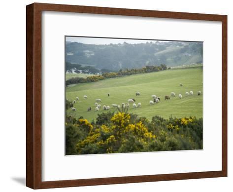 Sheep Graze on the Otago Peninsula Hillside-Bill Hatcher-Framed Art Print