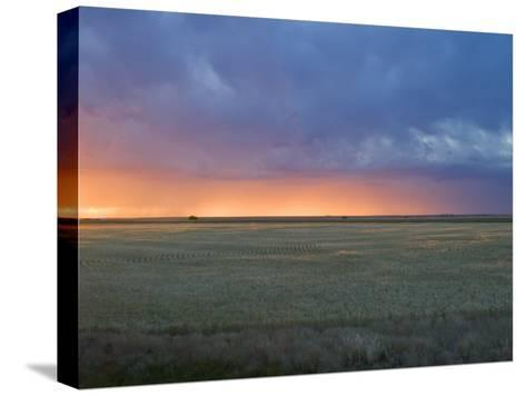 Colorful Sunset Illuminates the Sky over a Wheat Field in Colorado-Mike Theiss-Stretched Canvas Print