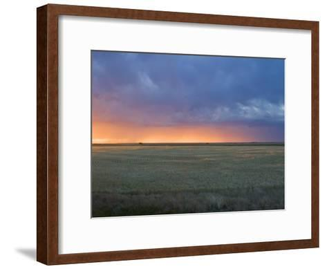 Colorful Sunset Illuminates the Sky over a Wheat Field in Colorado-Mike Theiss-Framed Art Print