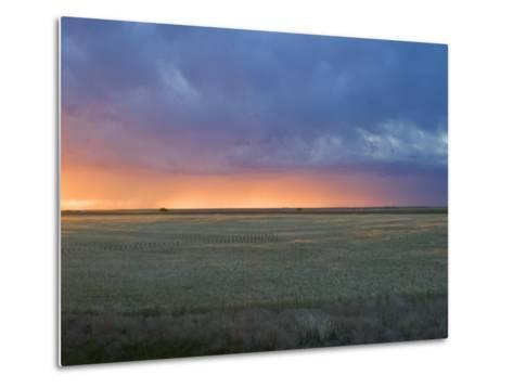Colorful Sunset Illuminates the Sky over a Wheat Field in Colorado-Mike Theiss-Metal Print