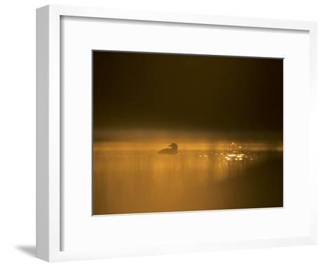 Common Loon, Wyoming-Michael S^ Quinton-Framed Art Print