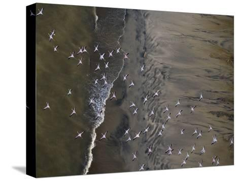 Flamingos Flying over Surf Breaking at Lake Turkana-Michael Polzia-Stretched Canvas Print