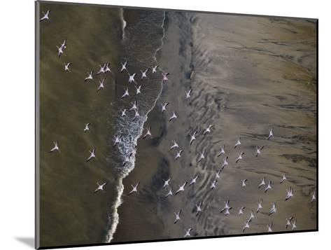 Flamingos Flying over Surf Breaking at Lake Turkana-Michael Polzia-Mounted Photographic Print