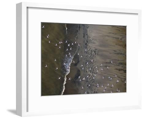 Flamingos Flying over Surf Breaking at Lake Turkana-Michael Polzia-Framed Art Print