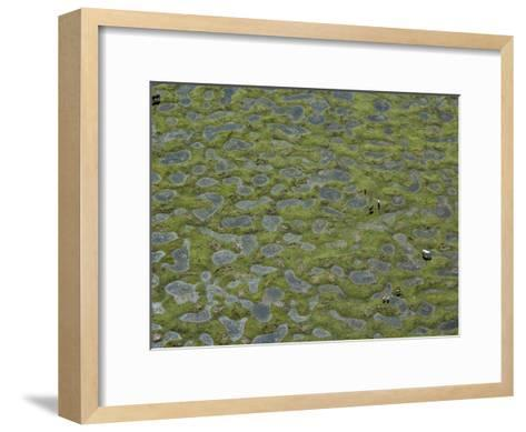 Horses Grazing in a Pock Marked and Partially Flooded Landscape-Michael Polzia-Framed Art Print