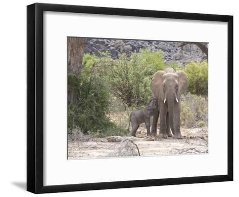 Elephant Feeding Her Newborn Calf-Michael Polzia-Framed Art Print
