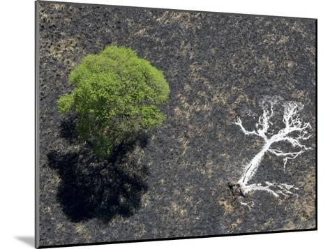 Ashes of a Burned Tree and a Live Standing One: Life and Death-Michael Polzia-Mounted Photographic Print