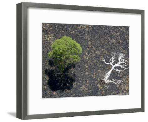 Ashes of a Burned Tree and a Live Standing One: Life and Death-Michael Polzia-Framed Art Print