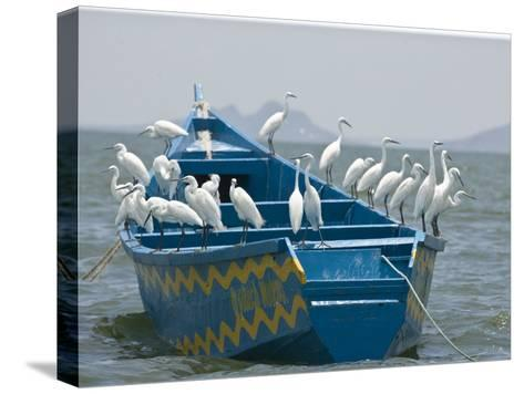 Egrets on a Blue Boat with a Yellow Pattern-Michael Polzia-Stretched Canvas Print