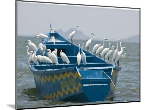 Egrets on a Blue Boat with a Yellow Pattern-Michael Polzia-Mounted Photographic Print