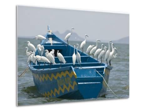 Egrets on a Blue Boat with a Yellow Pattern-Michael Polzia-Metal Print