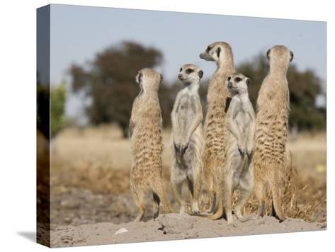 Meerkats on the Edge of the Makgadikgadi Pans-Michael Polzia-Stretched Canvas Print
