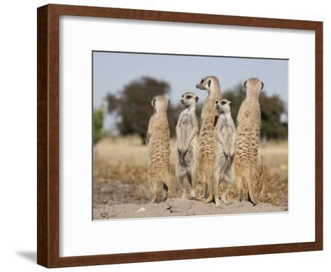 Meerkats on the Edge of the Makgadikgadi Pans-Michael Polzia-Framed Art Print