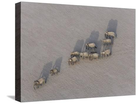 Herd of Elephants Cast Shadow as They March in a Desert-Michael Polzia-Stretched Canvas Print