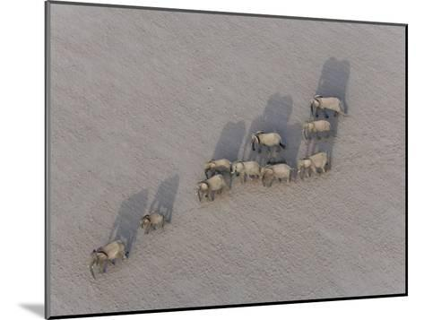 Herd of Elephants Cast Shadow as They March in a Desert-Michael Polzia-Mounted Photographic Print