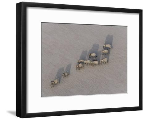 Herd of Elephants Cast Shadow as They March in a Desert-Michael Polzia-Framed Art Print