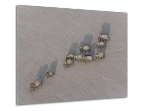 Herd of Elephants Cast Shadow as They March in a Desert-Michael Polzia-Metal Print