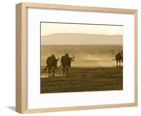 Backlit View of Wildebeests Walking Away-Michael Polzia-Framed Art Print