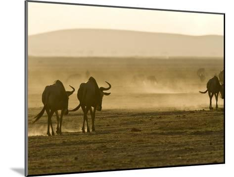 Backlit View of Wildebeests Walking Away-Michael Polzia-Mounted Photographic Print
