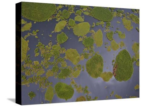 Vegetation Floating on Lake Wamala and Reflections of a Cloudy Sky-Michael Polzia-Stretched Canvas Print