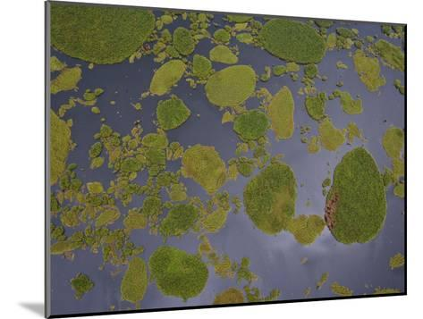 Vegetation Floating on Lake Wamala and Reflections of a Cloudy Sky-Michael Polzia-Mounted Photographic Print