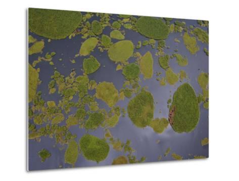 Vegetation Floating on Lake Wamala and Reflections of a Cloudy Sky-Michael Polzia-Metal Print