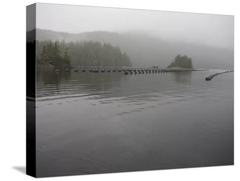 Oyster Farm in a Calm Inlet of Clayoquot Sound-Taylor S^ Kennedy-Stretched Canvas Print