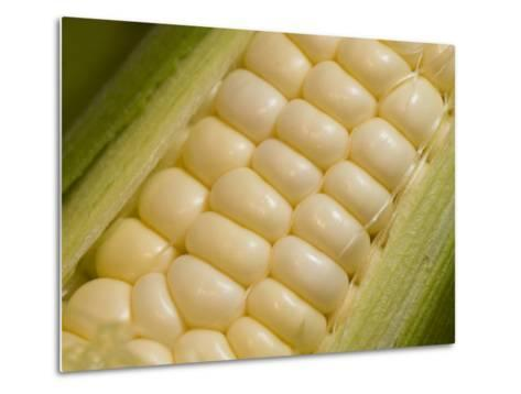 Close View of Corn-Taylor S^ Kennedy-Metal Print