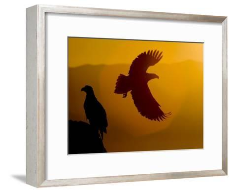 Silhouette of a Steller's Sea Eagle in Flight as the Sun Is Setting-Roy Toft-Framed Art Print
