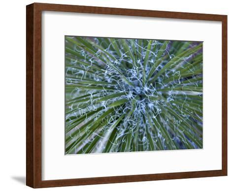 Detail of a Yucca Plant in the Needles District of Canyonlands-Scott Warren-Framed Art Print