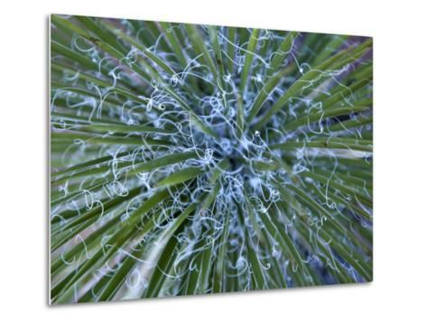 Detail of a Yucca Plant in the Needles District of Canyonlands-Scott Warren-Metal Print