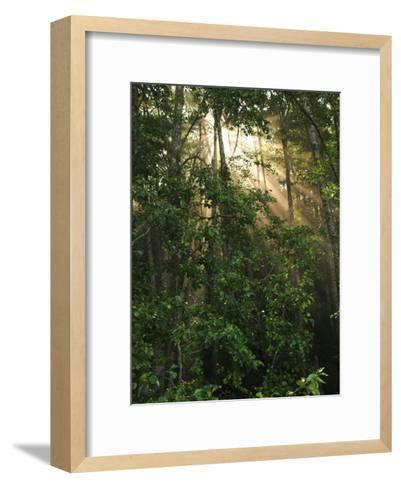 Sunlight Cuts Through the Morning Fog in the Olympic National Forest-George Grall-Framed Art Print