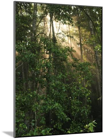 Sunlight Cuts Through the Morning Fog in the Olympic National Forest-George Grall-Mounted Photographic Print