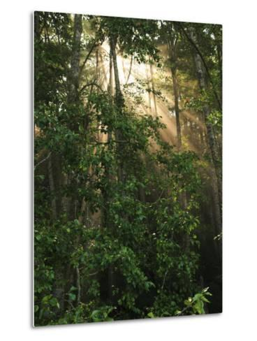 Sunlight Cuts Through the Morning Fog in the Olympic National Forest-George Grall-Metal Print