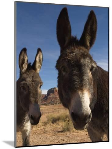 Donkeys Peer at the Camera in a Desert Scene-Ralph Lee Hopkins-Mounted Photographic Print