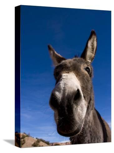 Portrait of a Burro in New Mexico-Ralph Lee Hopkins-Stretched Canvas Print