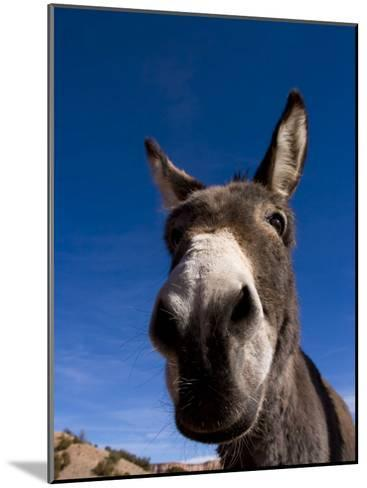 Portrait of a Burro in New Mexico-Ralph Lee Hopkins-Mounted Photographic Print