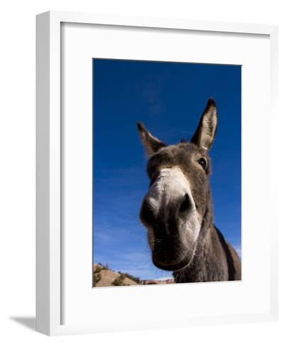 Portrait of a Burro in New Mexico-Ralph Lee Hopkins-Framed Art Print
