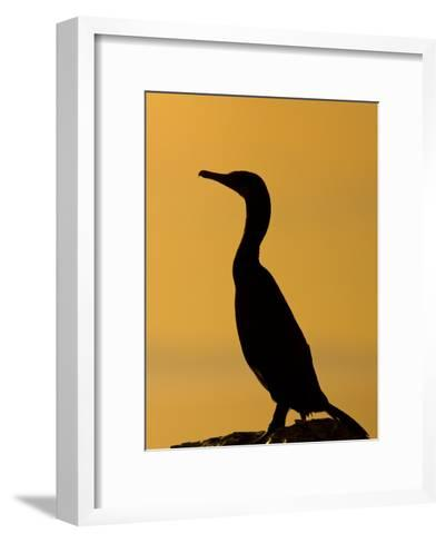 Cormorant Profiled by the Sunset-Ralph Lee Hopkins-Framed Art Print