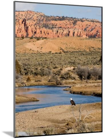 Desert Scene in Utah-Taylor S^ Kennedy-Mounted Photographic Print