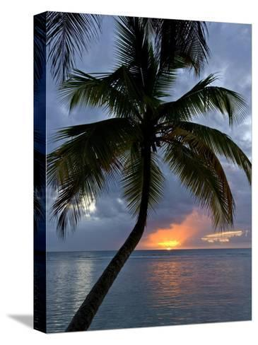 Palm Tree in Front of a Beautiful Sunset over the Water-Michael Melford-Stretched Canvas Print
