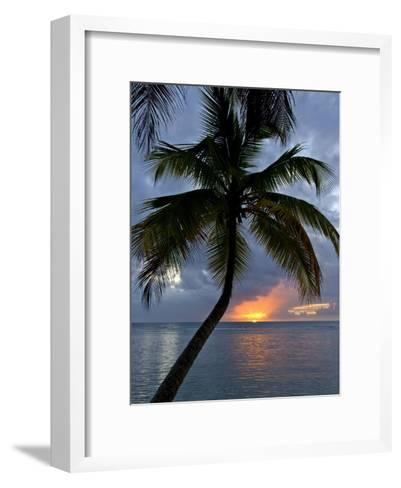 Palm Tree in Front of a Beautiful Sunset over the Water-Michael Melford-Framed Art Print